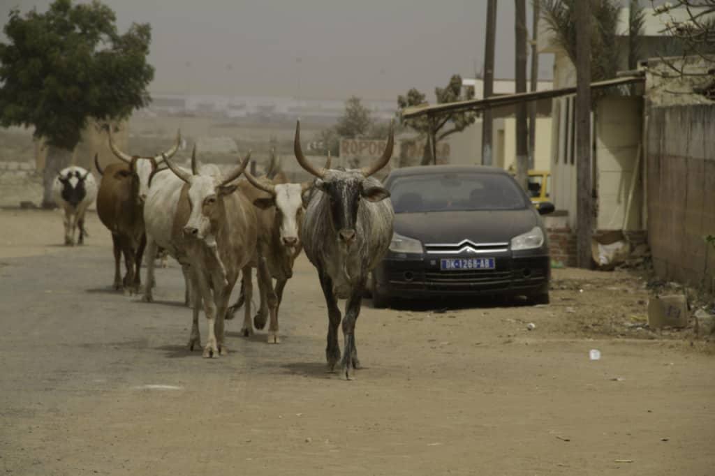 Street scene in Dakar