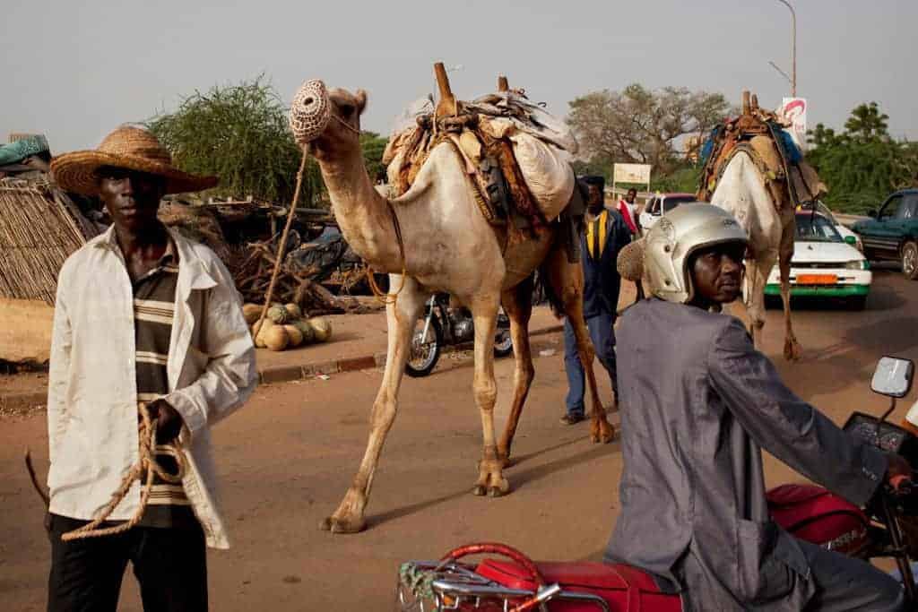 Men guide camels on a bridge through traffic in Niamey, Niger, September 18, 2013.