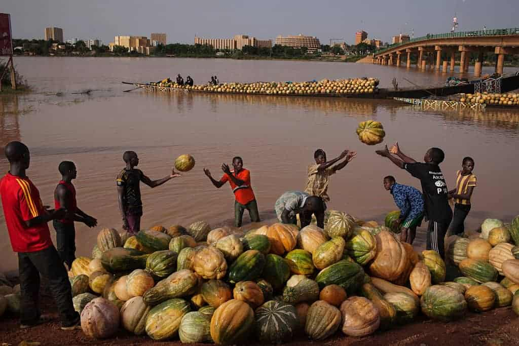 Men toss squash onto the banks of the Niger River in Niamey, Niger, September 18, 2013. REUTERS/Joe Penney (NIGER - Tags: SOCIETY)