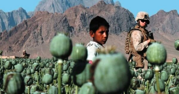 The global drug war . Here, poppy field in Afghanistan, sources of opium. CREATIVE COMMONS